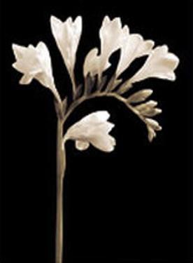 Black and White V by Edoardo Sardano