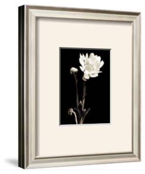 Black and White VII by Edoardo Sardano