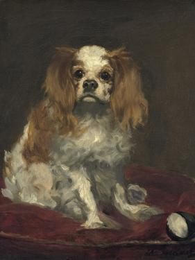 A King Charles Spaniel, 1866 by Edouard Manet