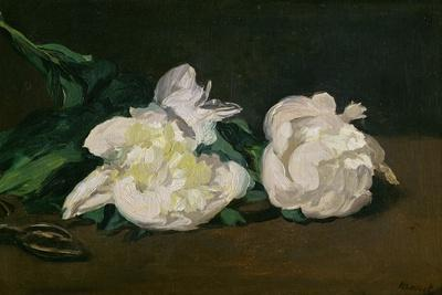 A Twig of White Peonies with Pruning Shears, 1864
