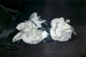 Branch of White Peonies and Secateurs by Edouard Manet