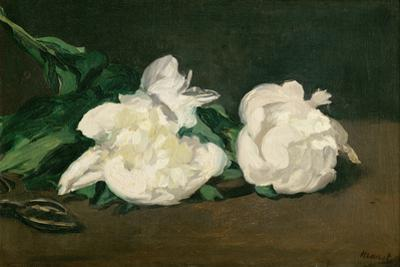 Branche de pivoines blanches et secateur, 1864 A twig of white peonies with pruning shears. by Edouard Manet