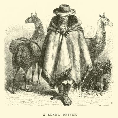 A Llama Driver by Édouard Riou