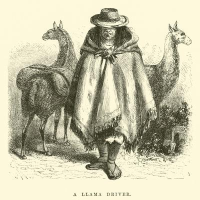 A Llama Driver