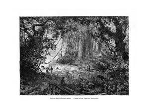 Rainforest in British Honduras, 19th Century by Edouard Riou