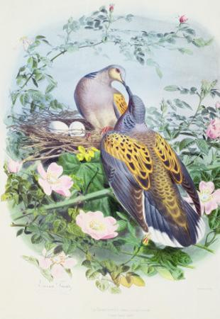 A Pair of Turtle Doves