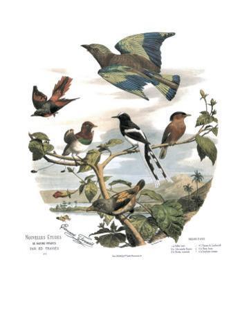 Asian Birds