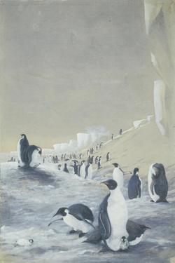 Emperor Penguin at Cape Crozier, Mar 28, 1911 by Edward Adrian Wilson