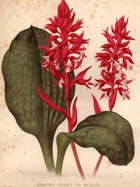 Orchid by Edward Gooch