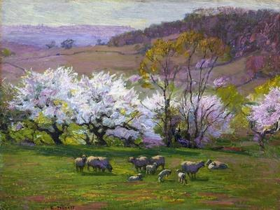 Blossom Time