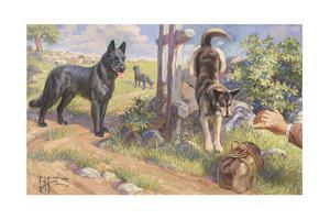 Groenendael and Malinois Dogs Work as Herders and Couriers by Edward Herbert Miner