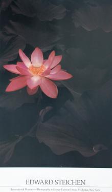 Lotus by Edward J. Steichen