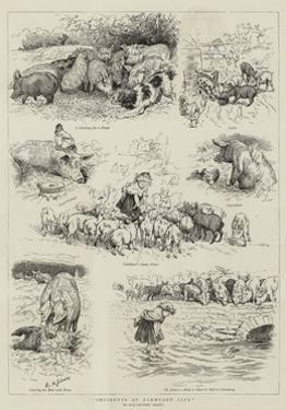 Incidents of Farmyard Life by Edward Killingworth Johnson