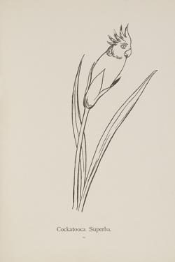 Cockatooca Superba. Illustration From Nonsense Botany by Edward Lear, Published in 1889. by Edward Lear