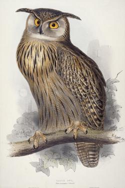Eagle Owl, Bubo Maximus, 1832-1837 by Edward Lear
