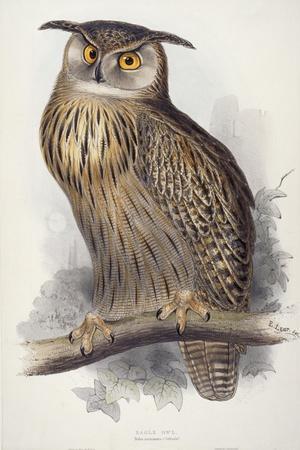 Eagle Owl, Bubo Maximus, 1832-1837