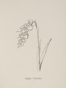 Jinglia Tinkettlia. Illustrations From Nonsense Botany, and Nonsense Alphabets by Edward Lear by Edward Lear