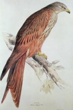 Kite by Edward Lear