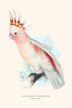 Leadbeater's Cockatoo - Cocatua Leadbeateri by Edward Lear