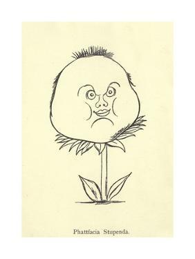 Phattfacia Stupenda by Edward Lear