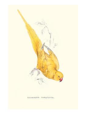 Rose Ringed Parrot (Yellow) - Psittacula Krameri by Edward Lear