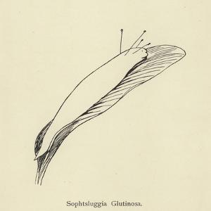 Sophtsluggia Glutinosa by Edward Lear