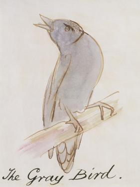 """The Gray Bird, from """"Sixteen Drawings of Comic Birds"""" by Edward Lear"""