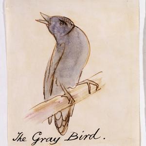 The Gray Bird by Edward Lear