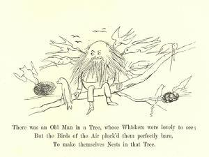There Was an Old Man in a Tree, Whose Whiskers Were Lovely to See by Edward Lear