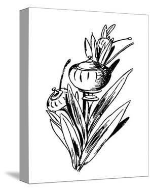 Tureenia Ladlecum by Edward Lear