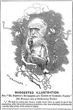 Charles Darwin, English Naturalist, 1875 by Edward Linley Sambourne
