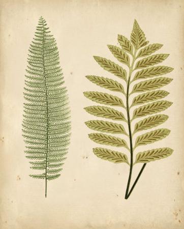 Cottage Ferns II by Edward Lowe