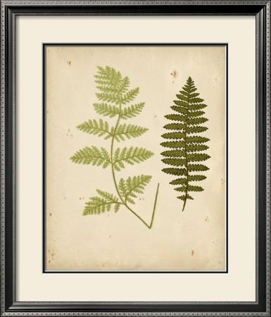 Cottage Ferns III by Edward Lowe
