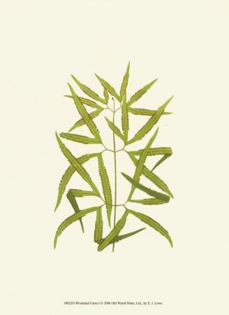Woodland Ferns I