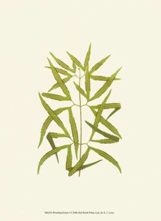 Woodland Ferns I by Edward Lowe
