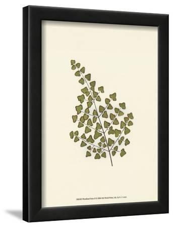Woodland Ferns II by Edward Lowe