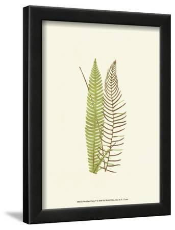 Woodland Ferns V by Edward Lowe