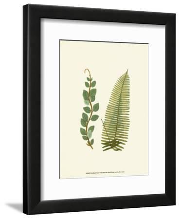 Woodland Ferns VI by Edward Lowe