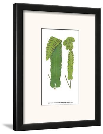 Woodland Ferns VIII by Edward Lowe