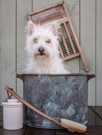 Washing the Dog by Edward M. Fielding