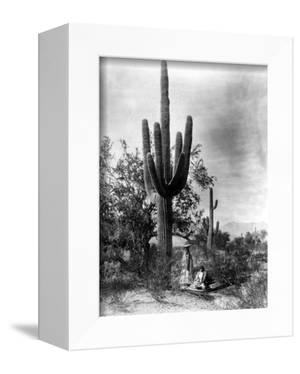 Saguaro Fruit Gatherers by Edward S Curtis