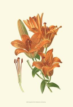 Striking Lilies II by Edward Step