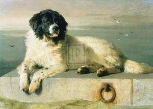 A Distinguished Member Of The Humane Society by Edwin Henry Landseer