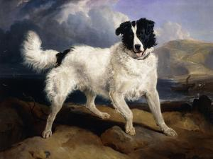 A Portrait of Neptune by Edwin Henry Landseer