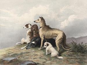 Highland Dogs by Edwin Henry Landseer