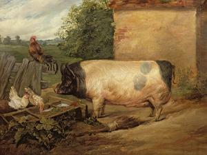 Portrait of a Prize Pig, Property of Squire Weston of Essex, 1810 by Edwin Henry Landseer