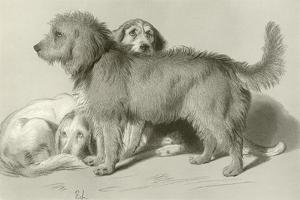 The Three Dogs by Edwin Henry Landseer