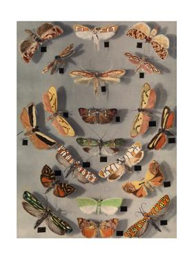 Collection of Various Little Moths by Edwin L. Wisherd