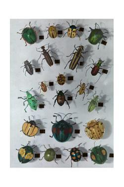 Collection of Various Small Beetles by Edwin L. Wisherd