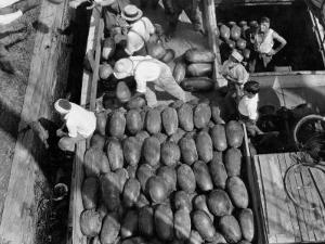 Men Work to Load a Ship Taking Watermelons to Baltimore by Edwin L. Wisherd